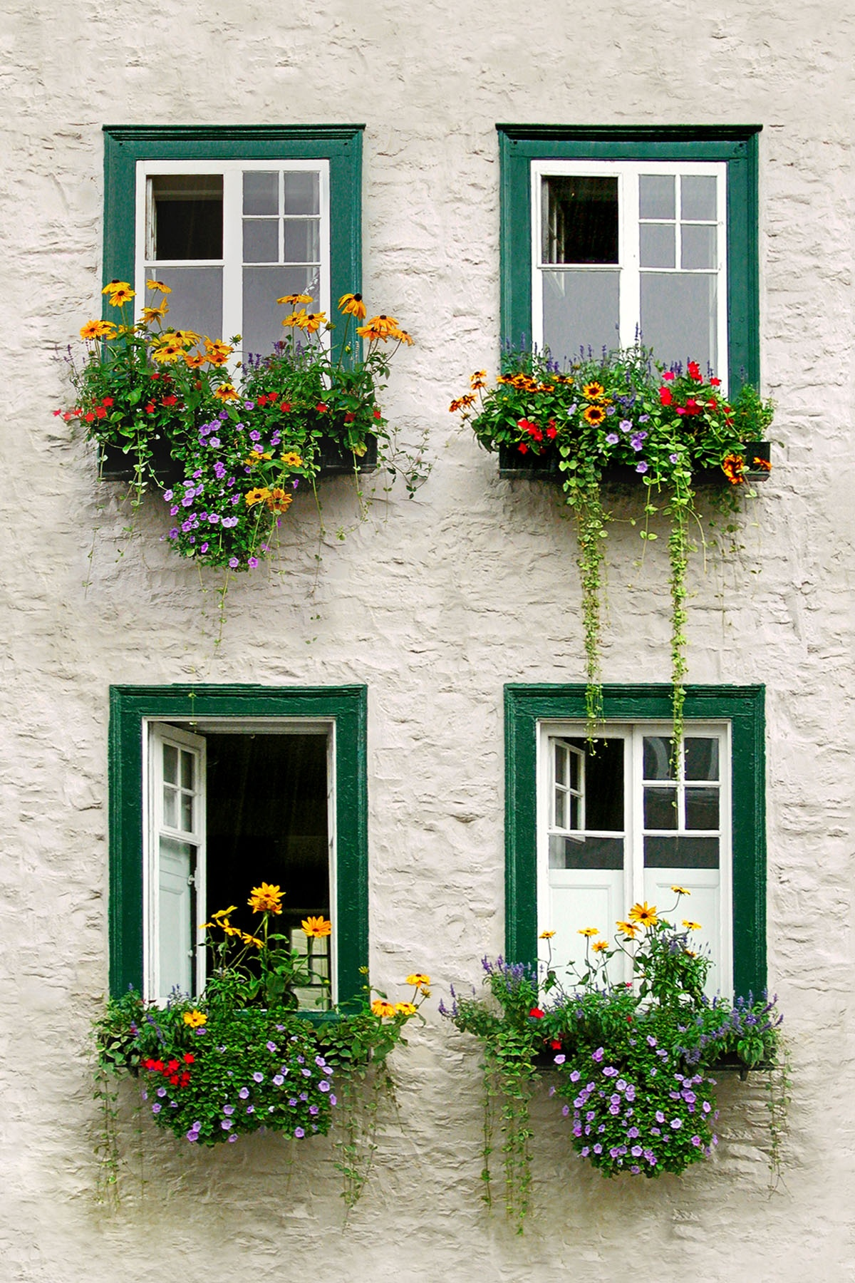 WINDOW-BOXES - If one window box is good...  four has to be better. These windows were on a small house in the suburbs of Quebec.