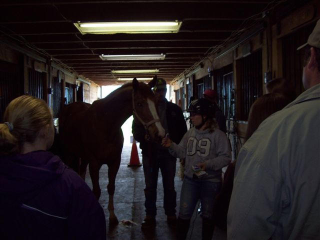 Demo on how to properly groom a horse for showmanship!