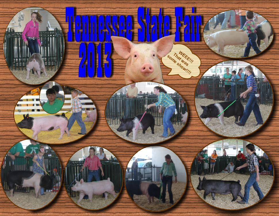 Erin Cantrell, Amber Collins, Erica Cantrell, Heath Kimes: Overall Grand Champion Barrow, Chance Bow, Cora Beth Key, Breyer Bow, Zane Thompson: Reserve Champion Crossbred Gilt, Lexi Stout, Clay Prater: Champion Chester White Gilt / Reserve Champion Supreme Overall Gilt