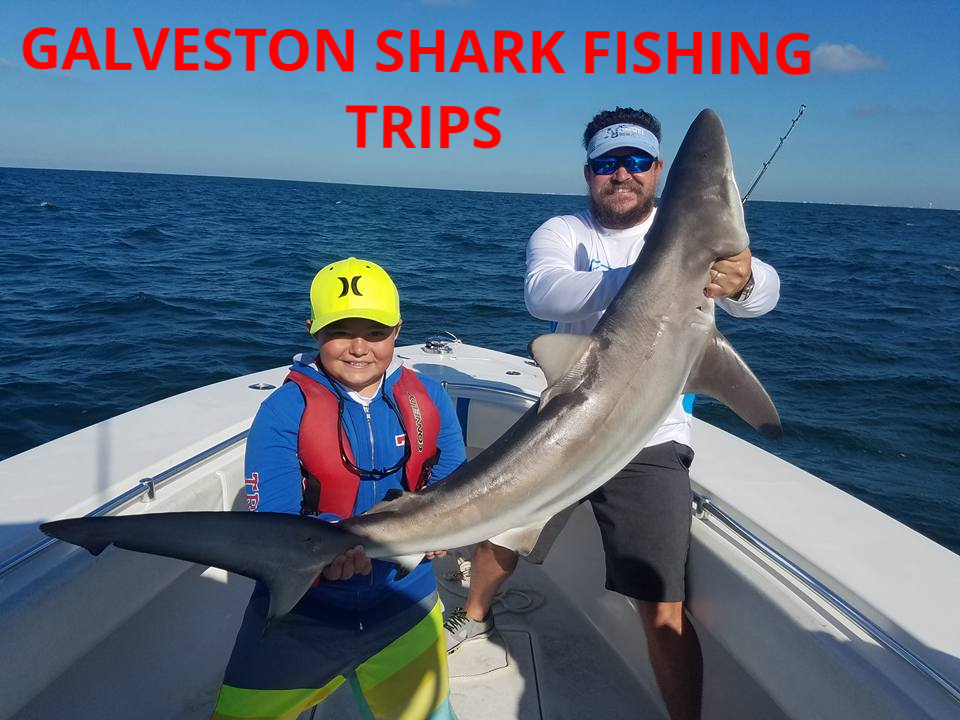 Galveston Shark Fishing Trips