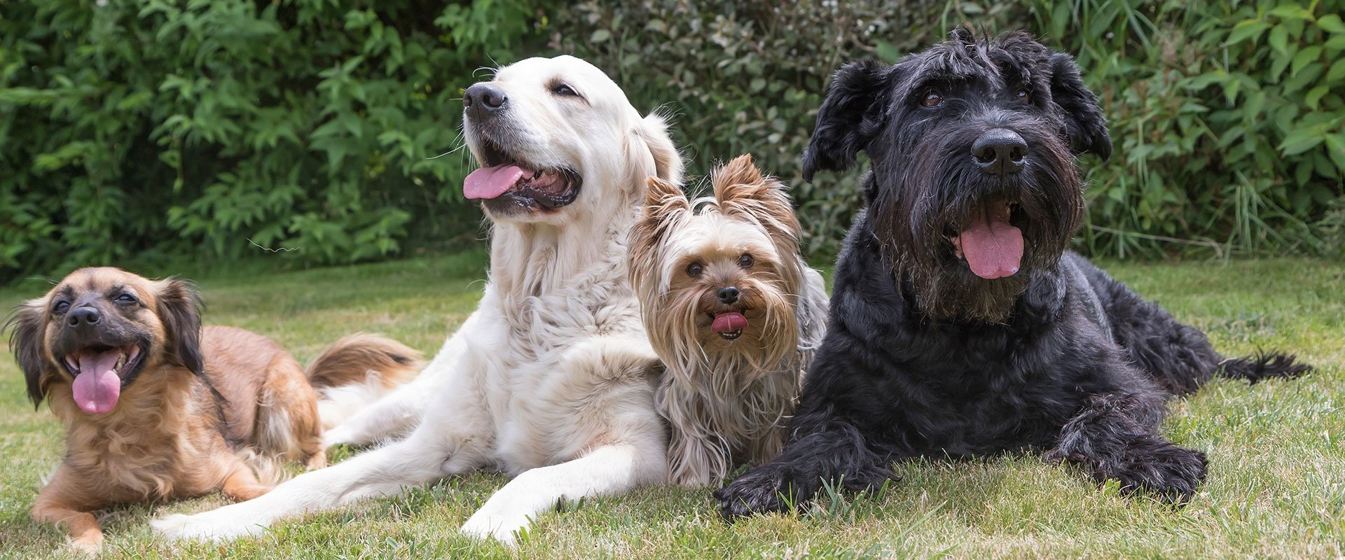 Pet Boarding Lewiston Dog Daycare Fur Family Cinema