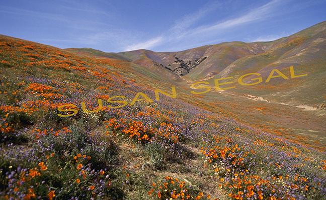 Poppy Field - Gorman, CA