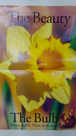 https://0201.nccdn.net/1_2/000/000/090/5b9/FlowerBulb.JPG