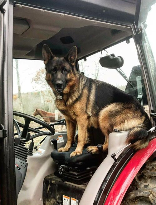 Dog Riding A Tractor