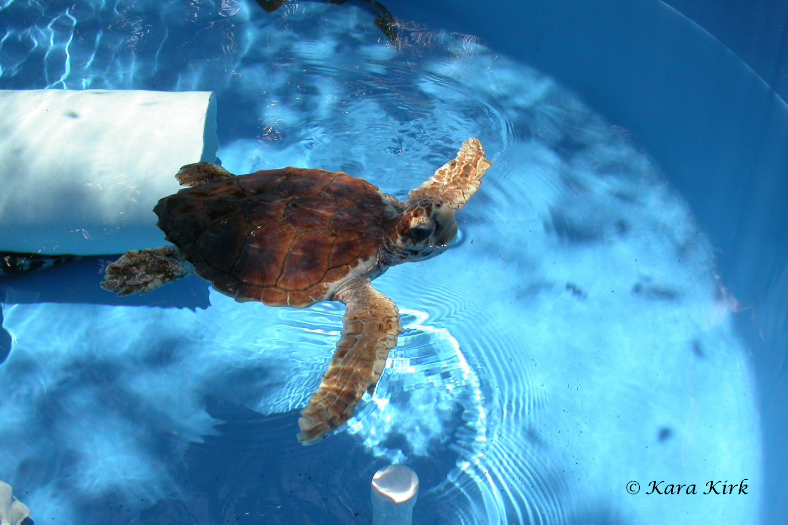 https://0201.nccdn.net/1_2/000/000/095/b2b/05-09-04-Juno-Sea-Turtle-Rehab-18-4x6-1600x1067.jpg