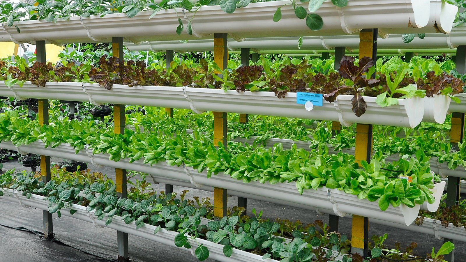Vegetables Are Grown Using Fertigation System
