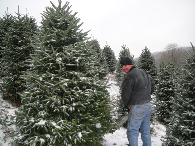 Cutting a visitor's Christmas tree.