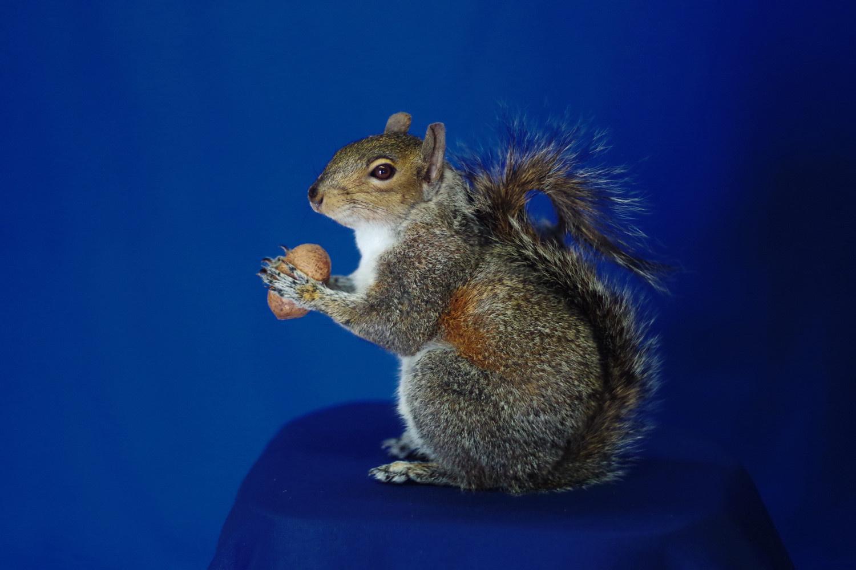 free standing squirrel - no wires, no base!