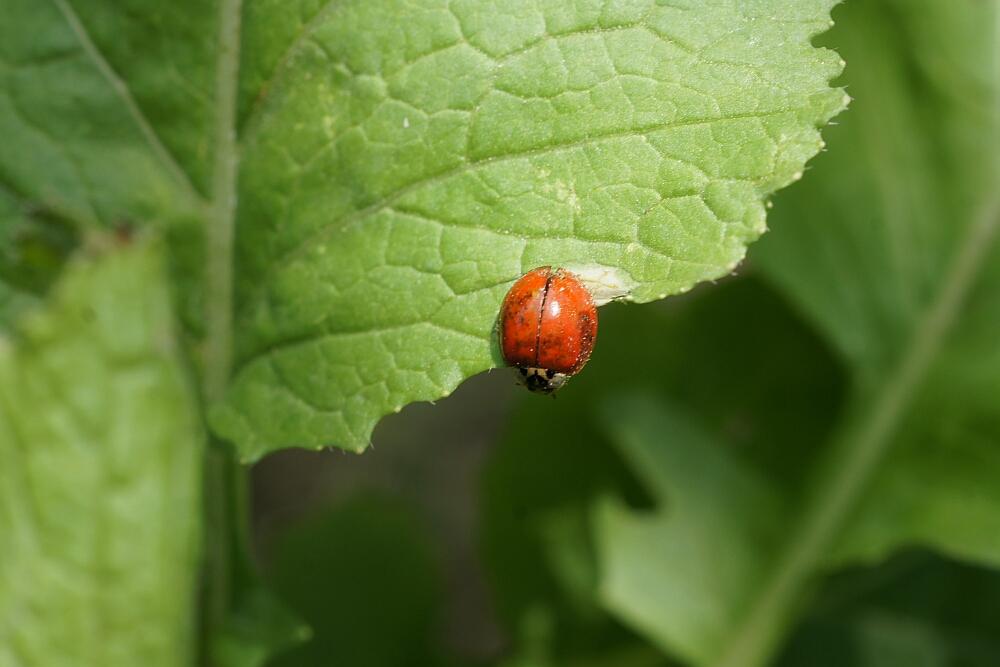 https://0201.nccdn.net/1_2/000/000/097/4e5/dsc09789_ladybug_1000.jpg