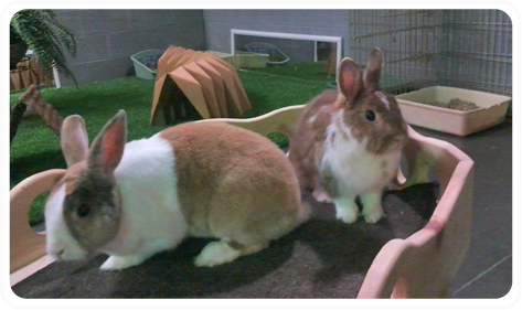 Rabbits In Boarding Pen