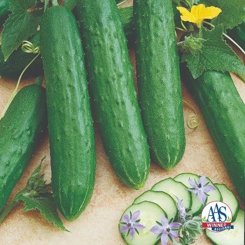Cucumber Saladmore Bush