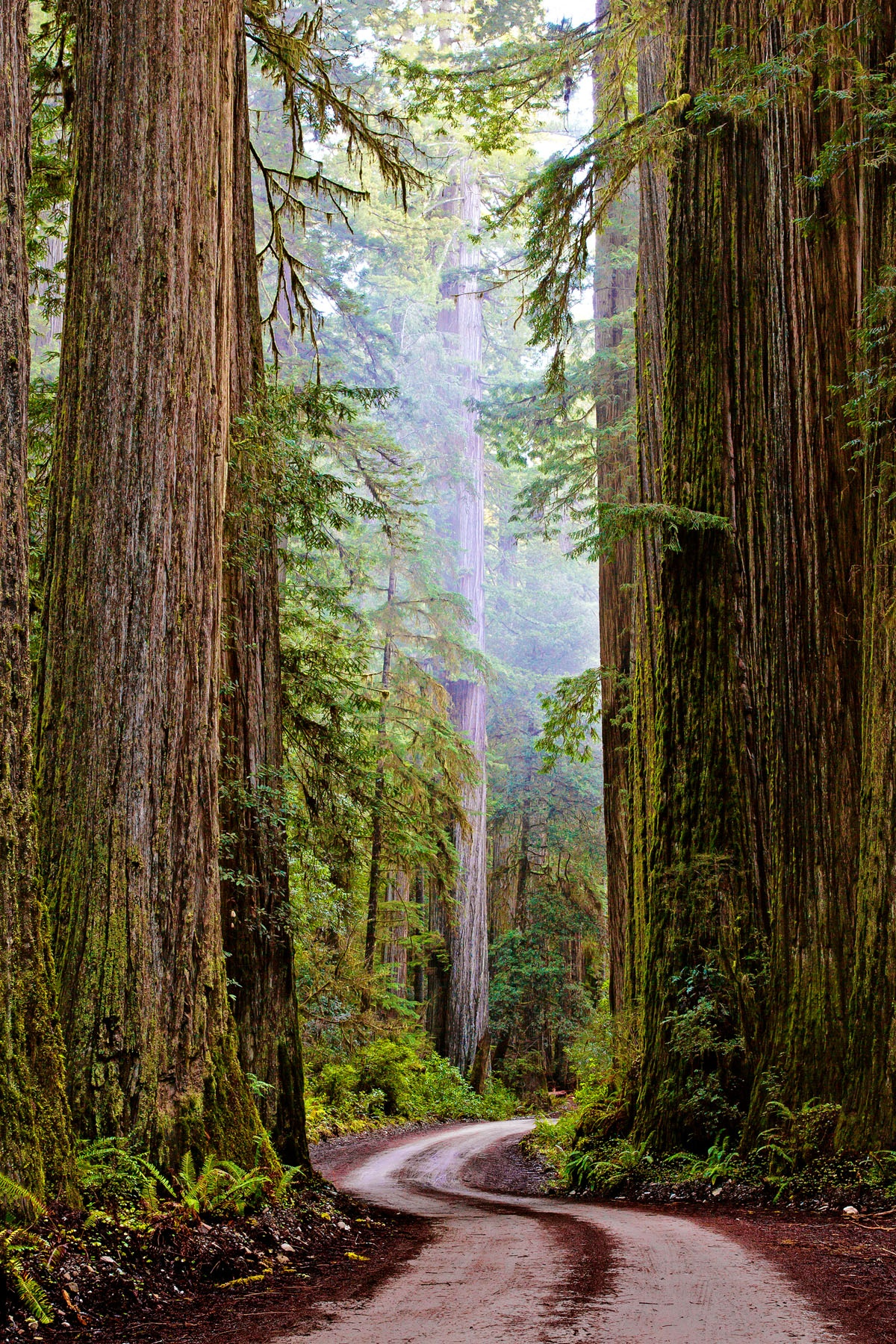 JEDEDIAH SMITH - Jedediah Smith State Redwood Park. This really should be on your short list of things that you must see before you leave this earth. If a drive through this forest on a day in February (that's when I saw it) doesn't convince you that there is a Creator, well ....