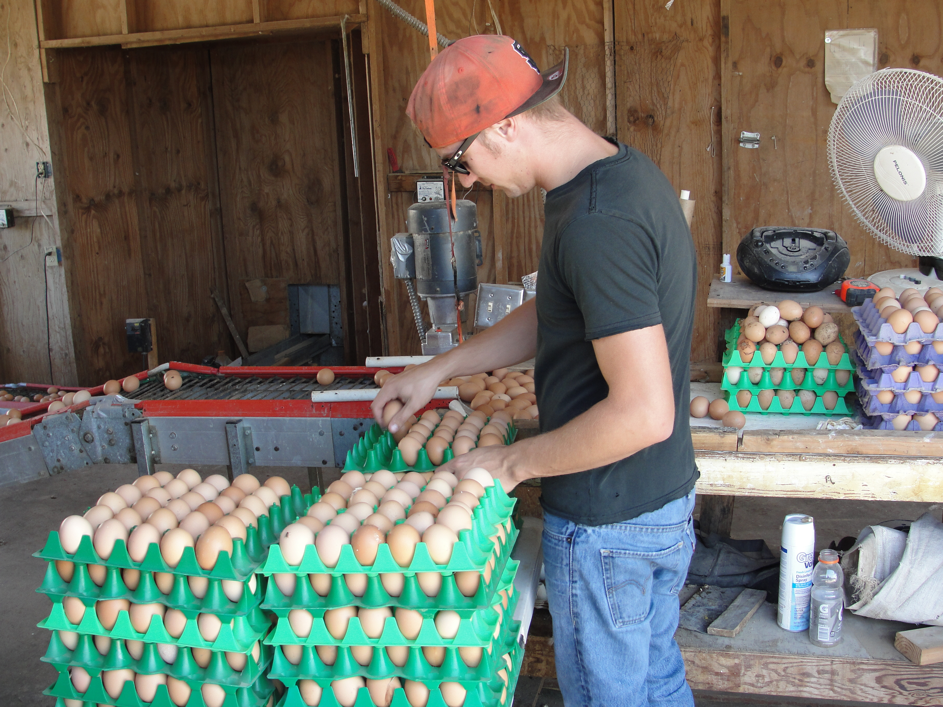 Man Organizing Eggs