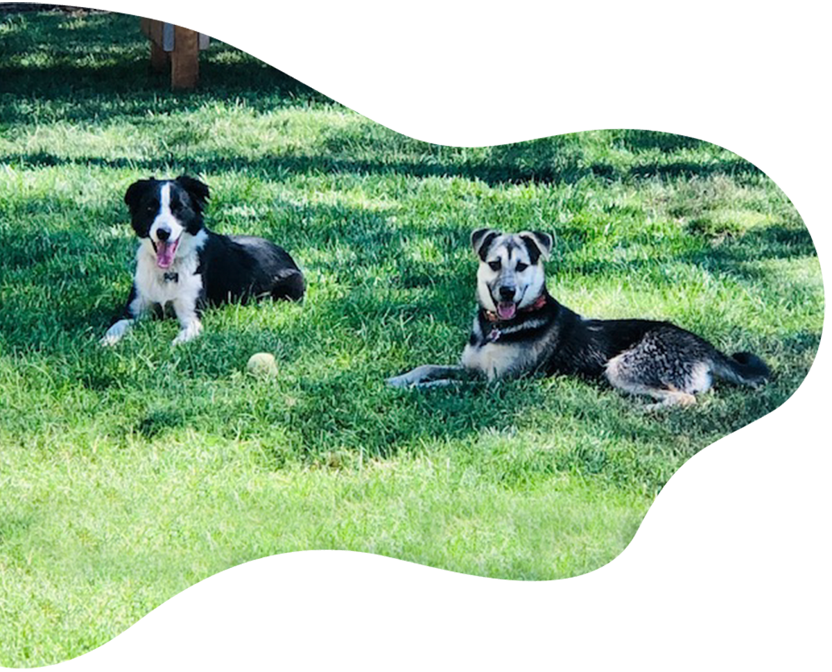 Side Yard Dogs in Repose