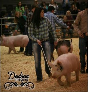 Kaitlyn Hardin 4th in Class 2015 TN State Market Hog Show