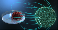 The Cedars-Sinai program uses precision science to build a mathematical virtual brain tumorfor testing.