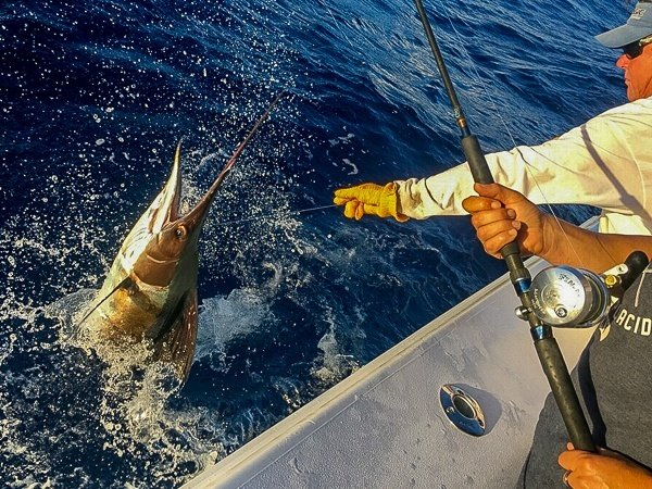 https://0201.nccdn.net/1_2/000/000/09d/67f/key-west-fishing-charters-compass-rose-2-3-600x450-600x450.jpg