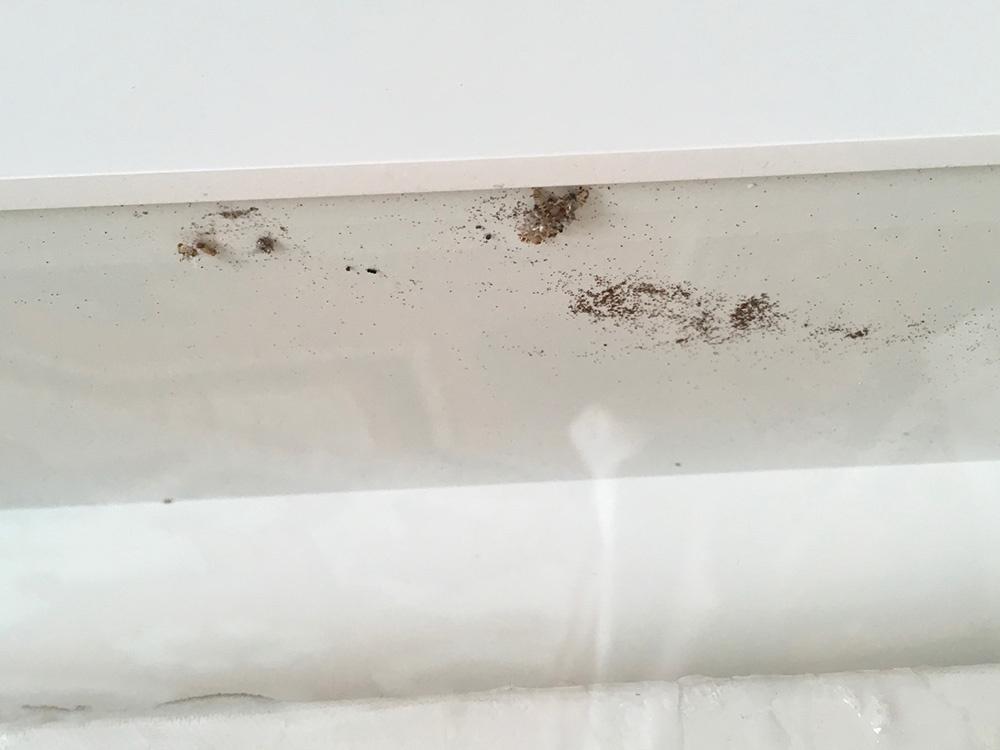 Monitoring  - Carpet Beetle Frass