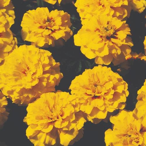 Janie Bright Yellow