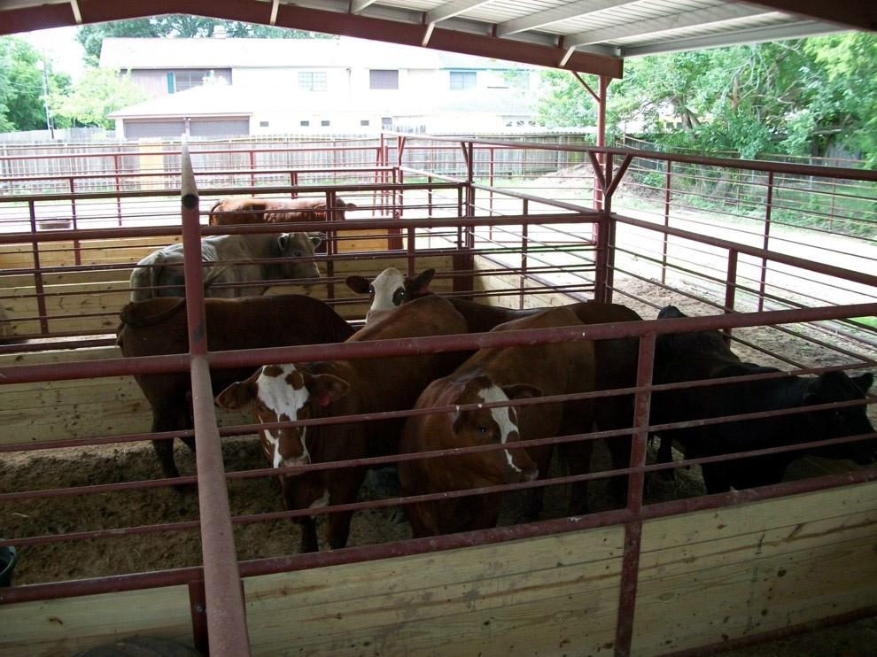 Hospitalization Barn
