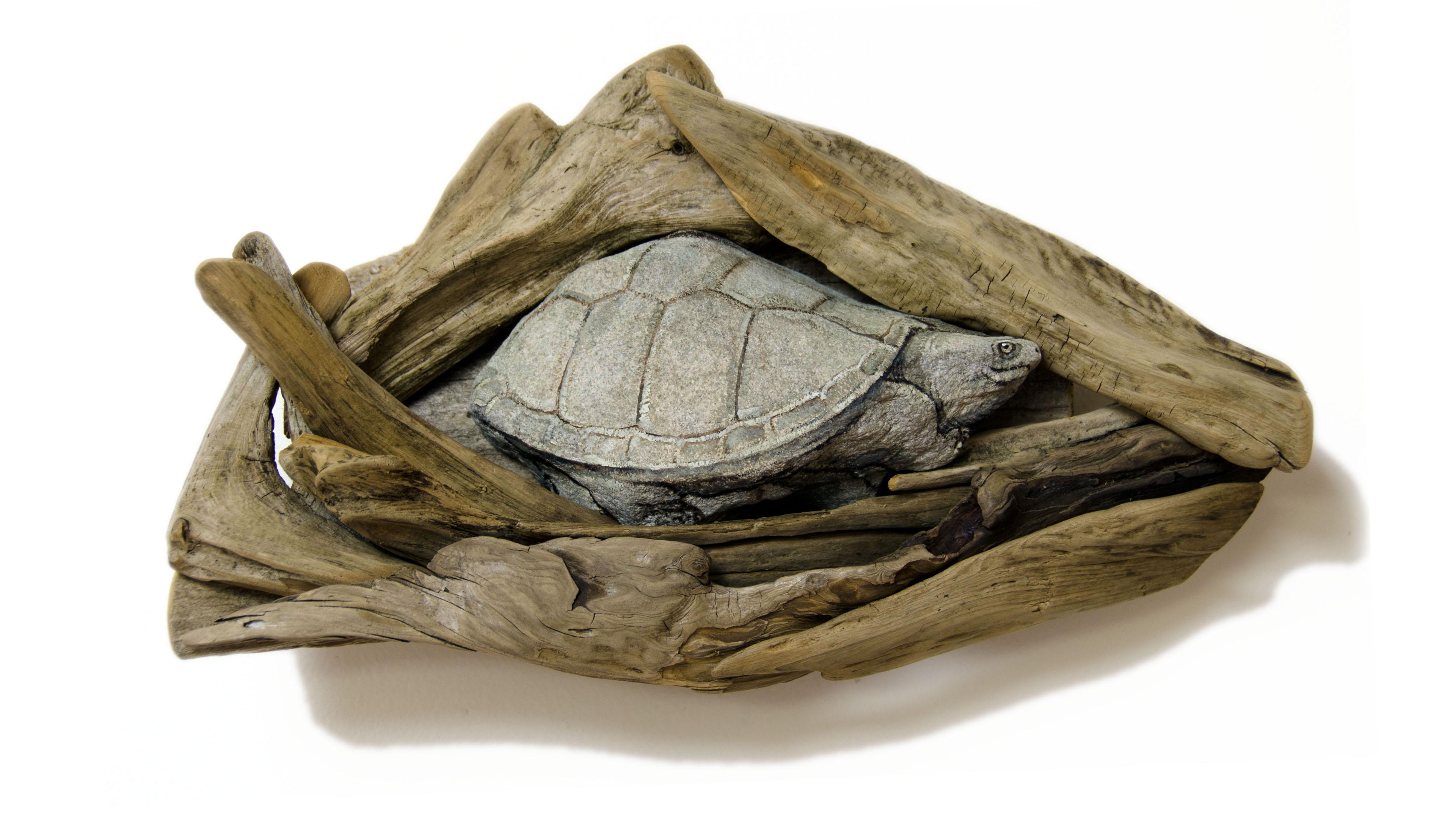 https://0201.nccdn.net/1_2/000/000/0a3/190/Turtle2-Aft.jpg