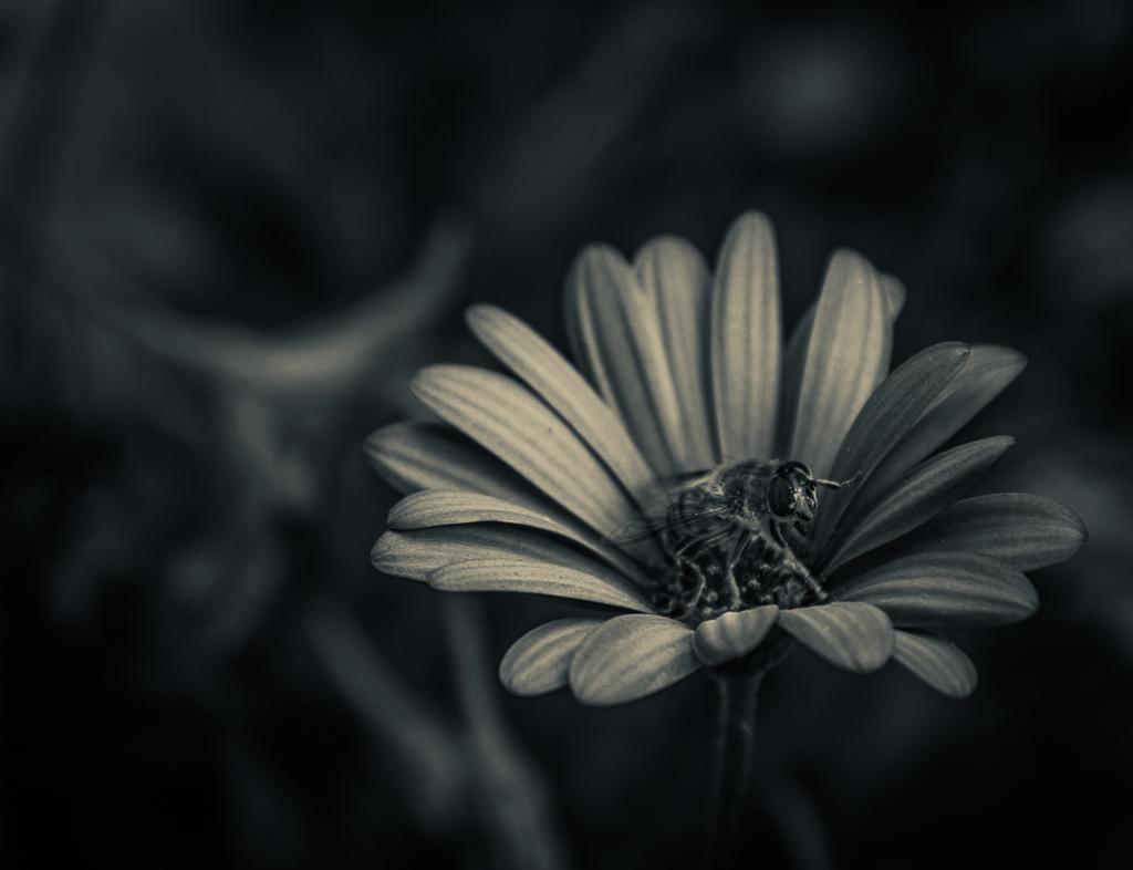 Flor y Abeja 2, 2018 A-049