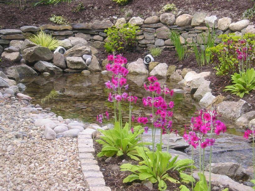 Garden Pond in Delgany