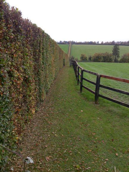 Hedge Cutting - Suffolk