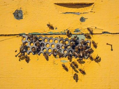 Wooden Rustic Beehive