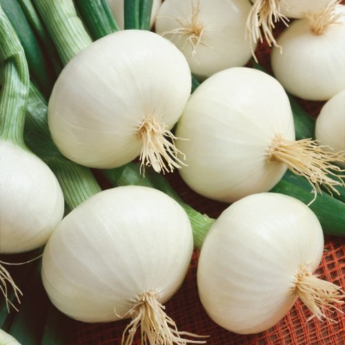 Onion Crystal White Max
