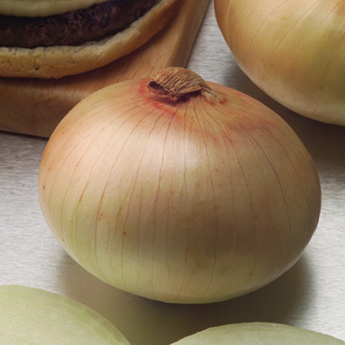 Onion Century