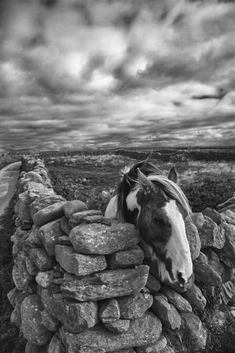 Innisheer Horse