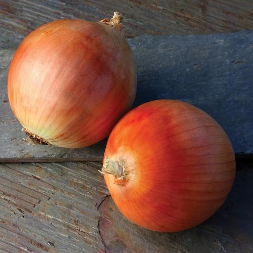 Onion Lasso