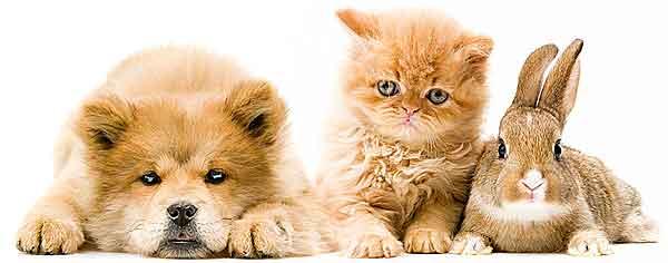 https://0201.nccdn.net/1_2/000/000/0af/d9a/conejo-perro-gato.jpg