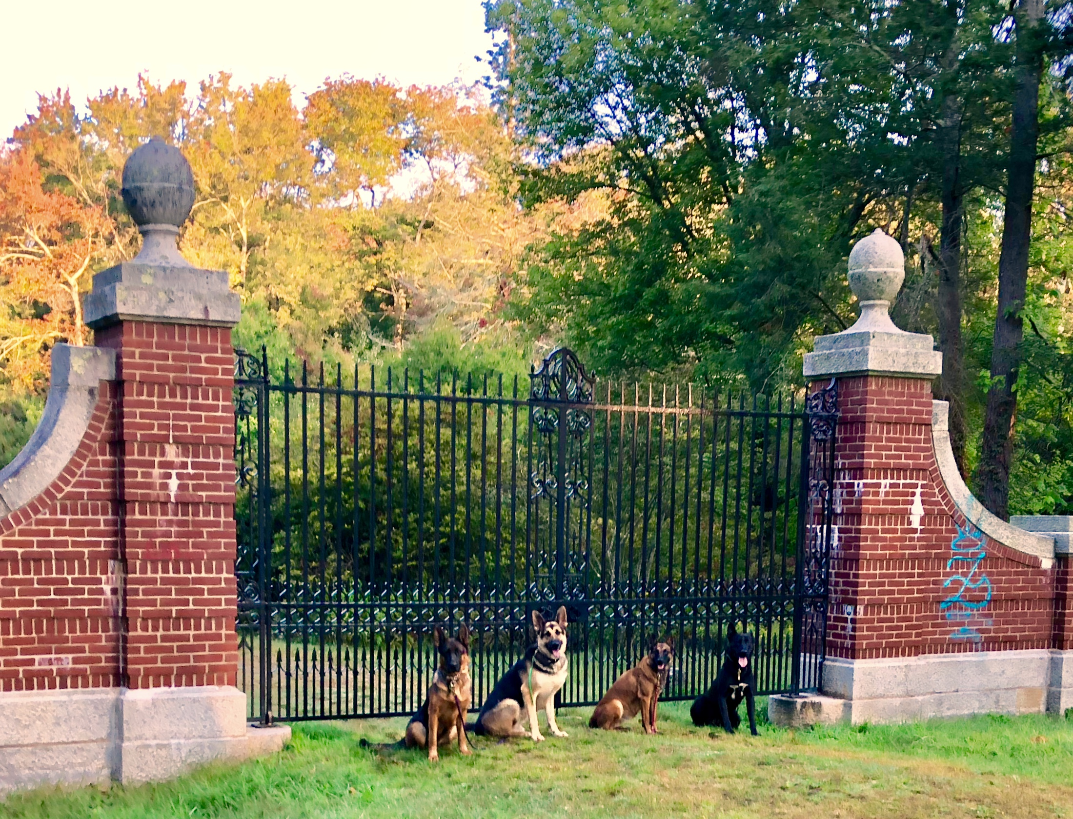 Dogs In Front Of A Gate