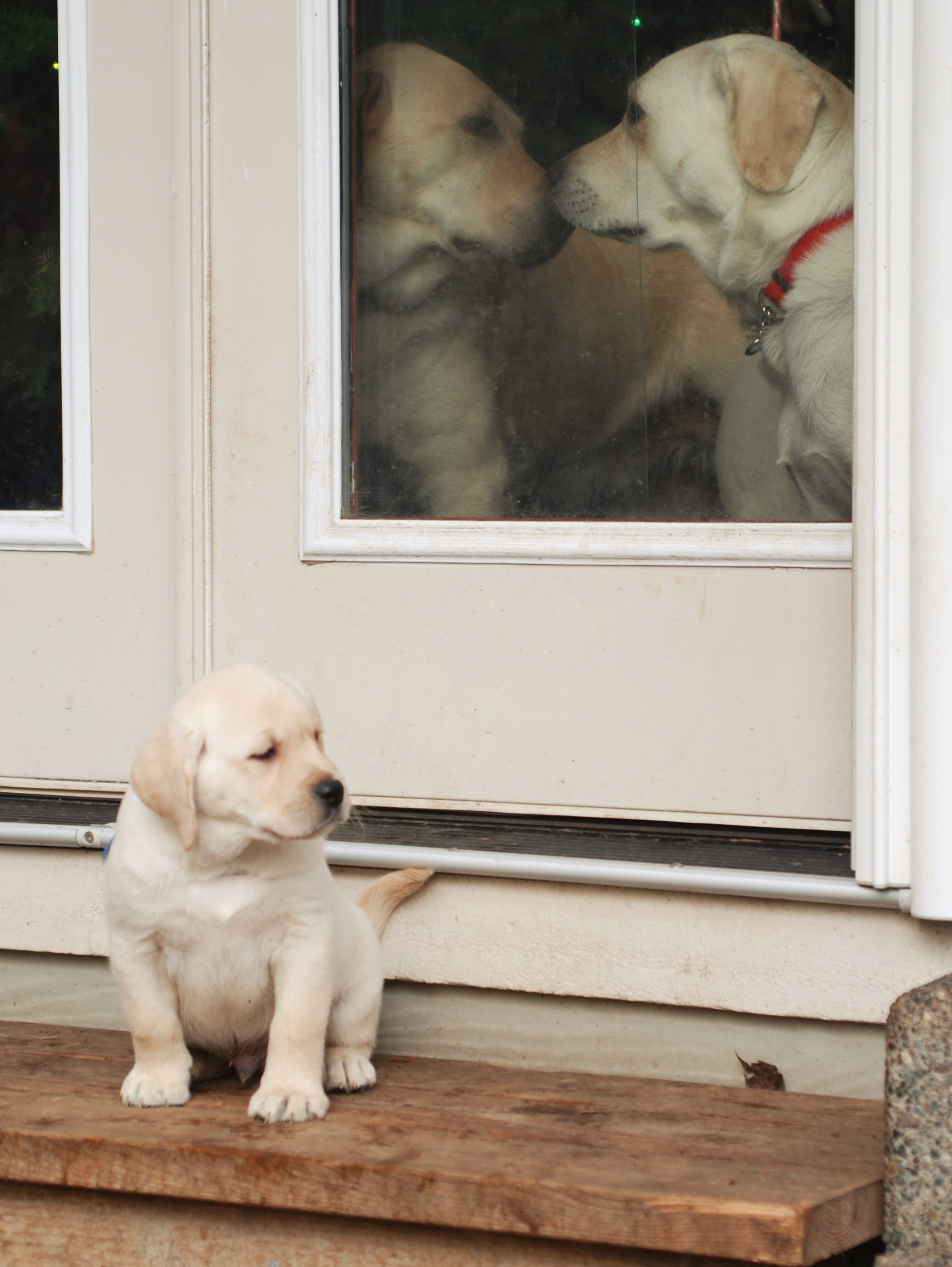 https://0201.nccdn.net/1_2/000/000/0b0/380/Puppies-12-19-10-095-2207x2936.jpg