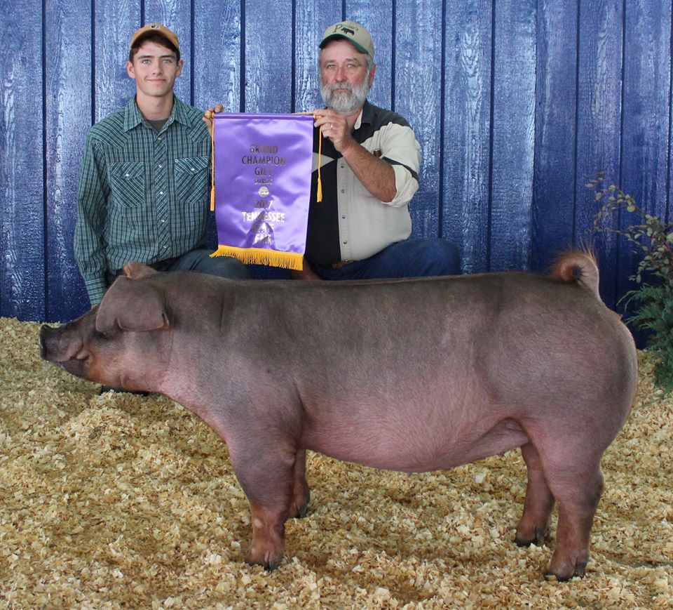 Gill Derryberrry 2017 Tennessee State Fair Champion Duroc Gilt