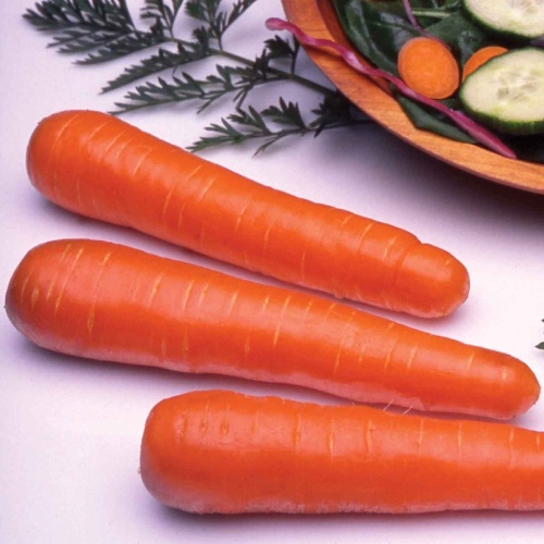 Carrot Ingot F1