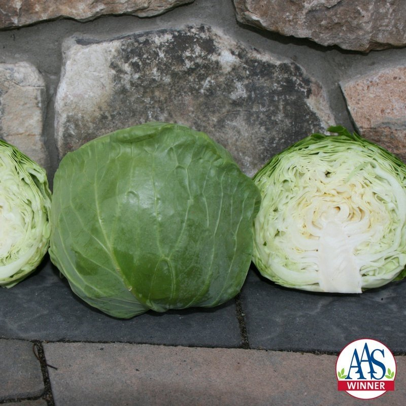 Cabbage Katarina