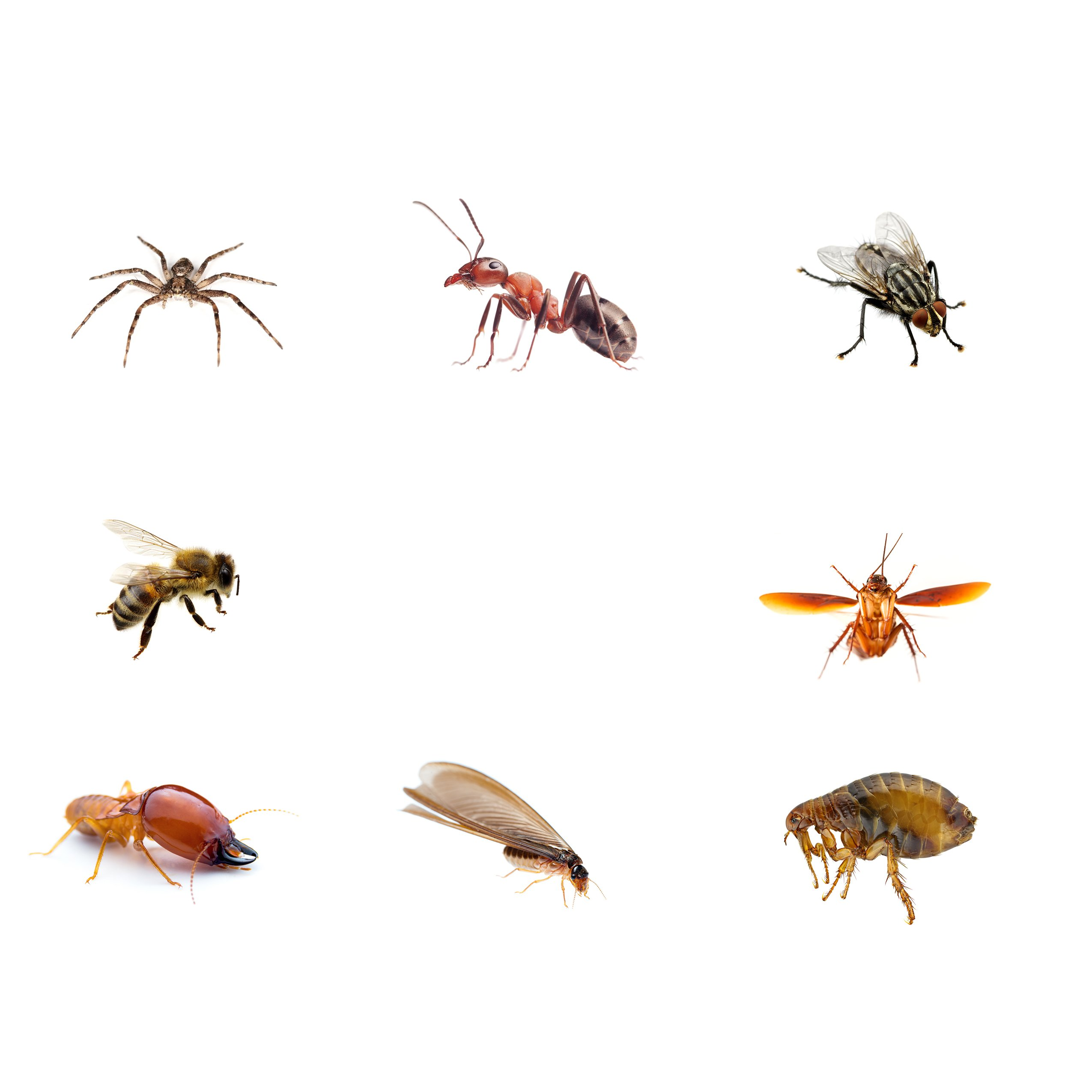 Pest control with bugs||||