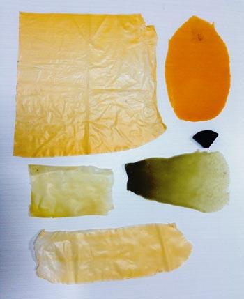 El-bioplástico-que-elabora-Sandra-Pascoe-utiliza-nopal-como-materia-prima-crédito-P-Miranda.jpg