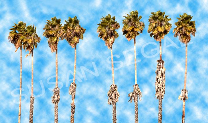 8 Palm Trees - Napa