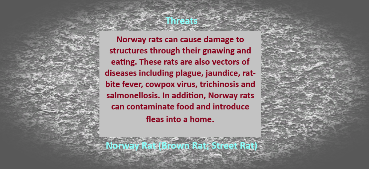 https://0201.nccdn.net/1_2/000/000/0be/0a5/Norway-Rat-Threats.png