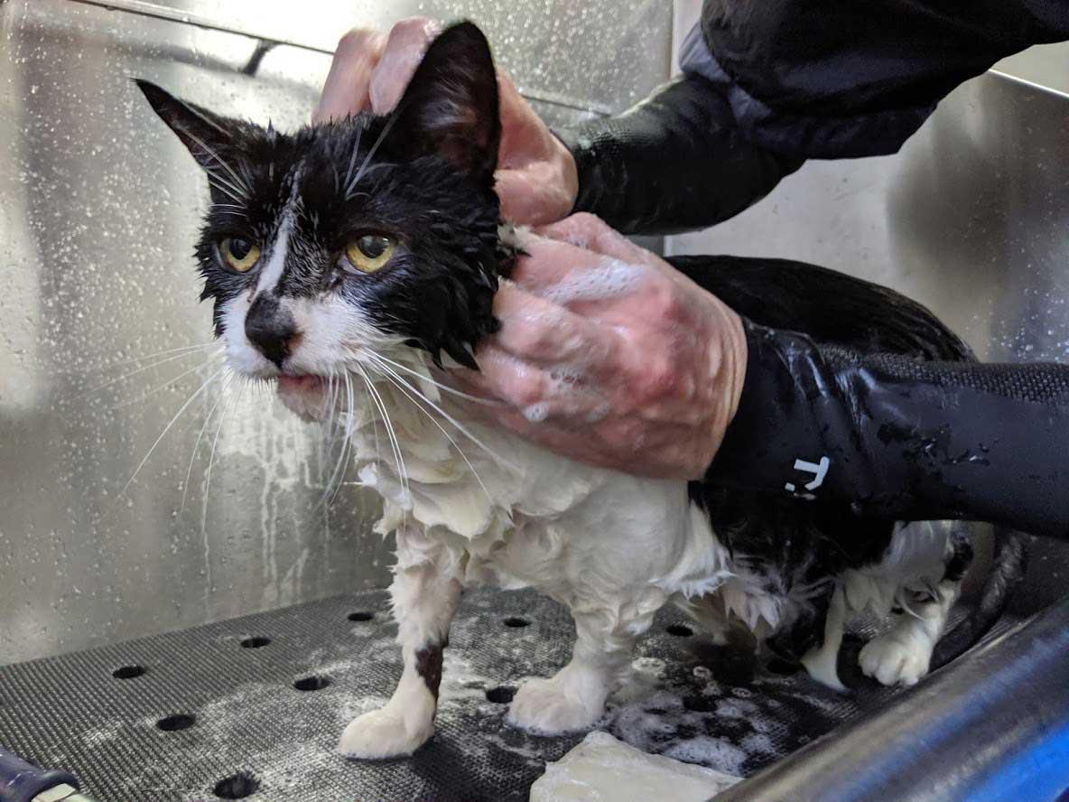 Cat Bath 2