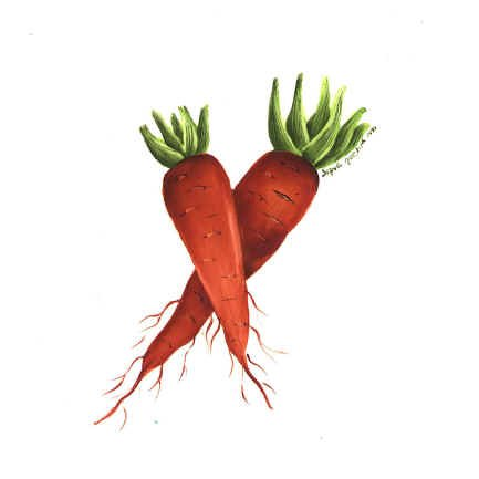 https://0201.nccdn.net/1_2/000/000/0c3/9b1/carrots.jpg