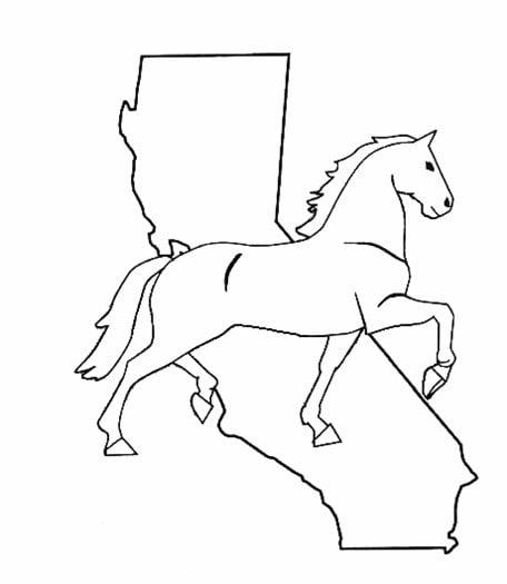 CALNET Horse Show