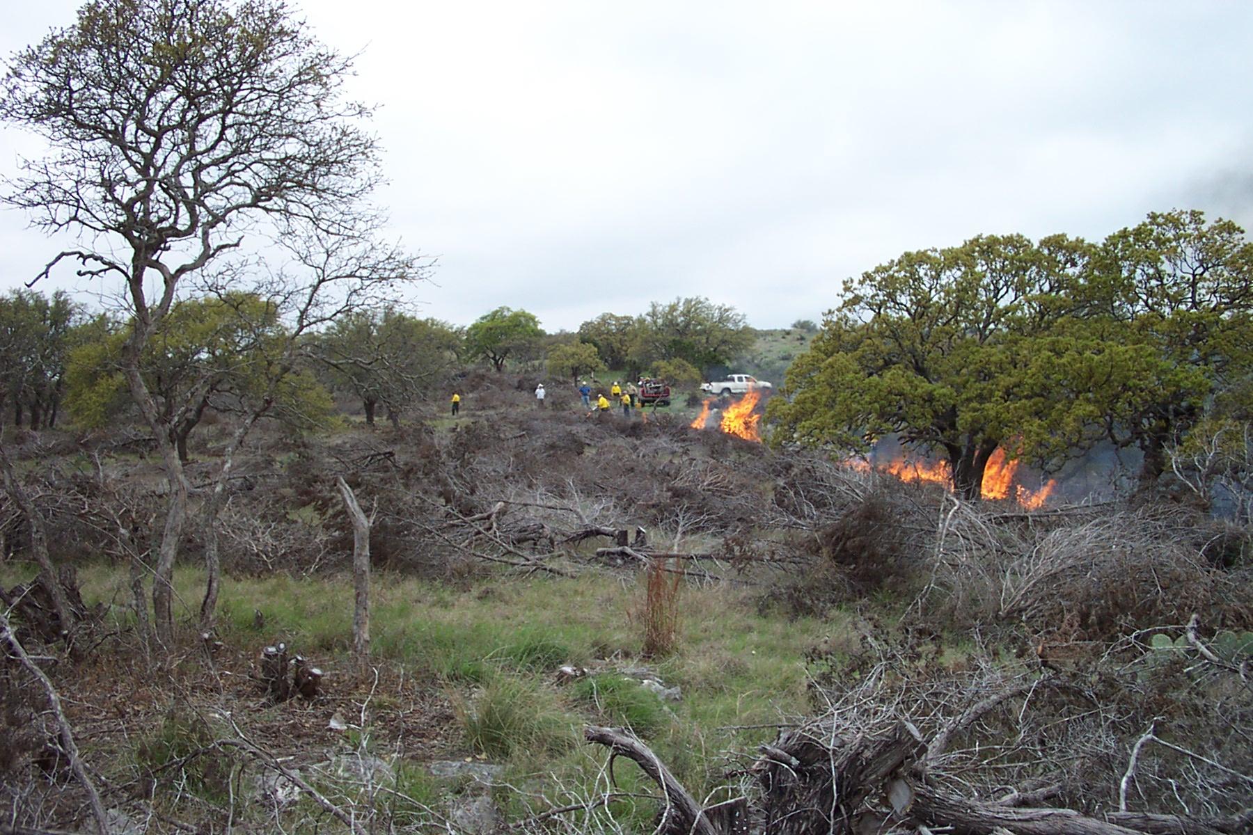 Wildlife Fireline