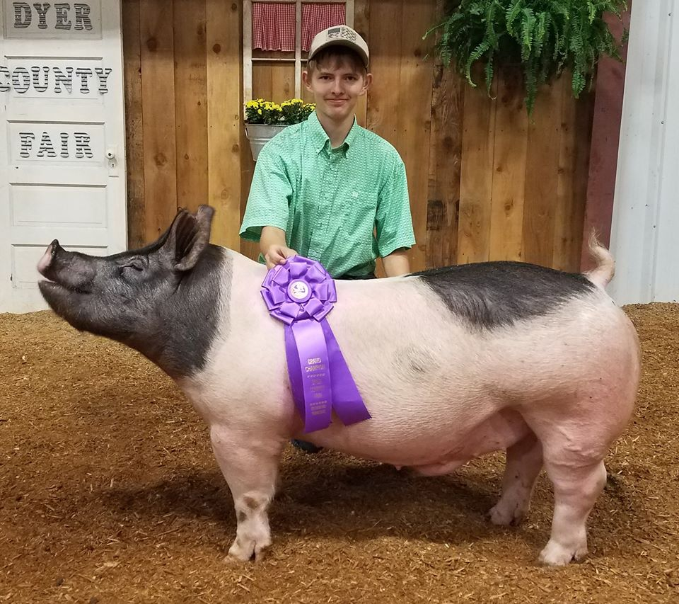 Will Derryberry 2017 Dyer County Fair Champion Crossbred Barrow