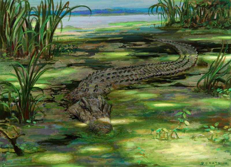 "Lurking Crocodile M12 Core Set 10"" x 13""  Oil on Panel private collection"