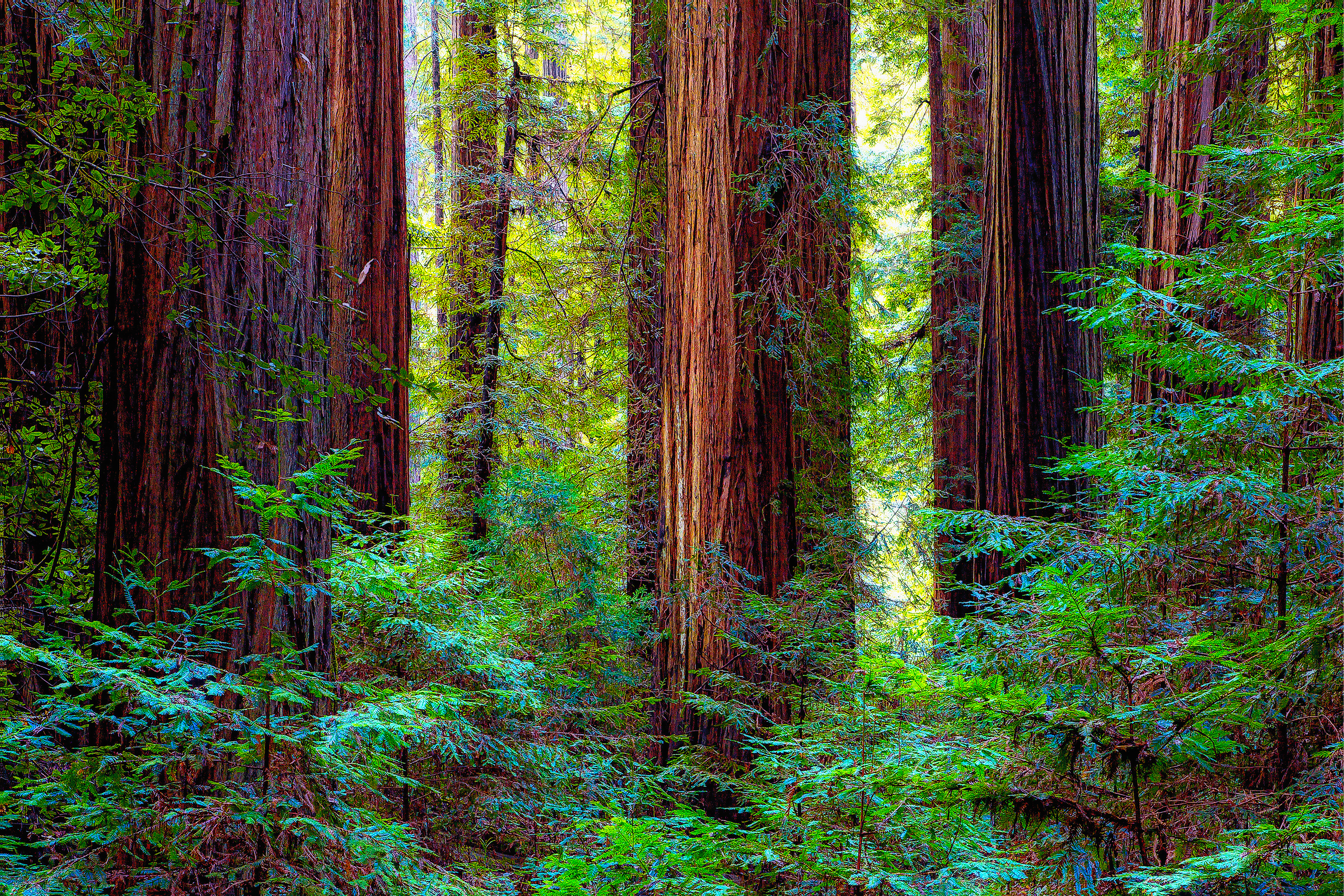 """""""WHO'S WOODS THESE ARE?"""" - Jedediah Smith State Redwood Park. The only redwood park you ever really need to see. A road goes through the park for more than six miles. On this February day, I don't remember seeing another car. """"Who's woods these are? I think I know!"""""""